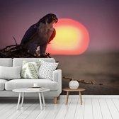 Fotobehang vinyl - Een slechtvalk bij zonsopgang breedte 440 cm x hoogte 350 cm - Foto print op behang (in 7 formaten beschikbaar)