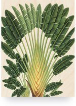 Print op hout - Botanical Palm - S