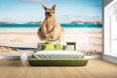 Kangoeroe op het strand Australie foto Fotobehang 380x265