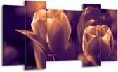 Canvas schilderij Tulp | Bruin, Wit | 120x65 5Luik