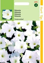Petunia Sneeuwbal - Petunia nana compacta - set van 8 stuks