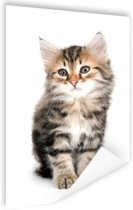 Jong grijs katje Poster 40x60 cm - Foto print op Poster (wanddecoratie woonkamer / slaapkamer) / Dieren Poster