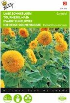 Zonnebloem Sungold - Helianthus annuus - set van 8 stuks