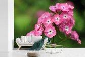Fotobehang vinyl - Roze vlambloemen met groene achtergrond breedte 600 cm x hoogte 400 cm - Foto print op behang (in 7 formaten beschikbaar)