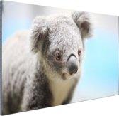 Een close-up van een koala Aluminium 120x80 cm - Foto print op Aluminium (metaal wanddecoratie)