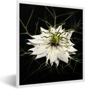 Foto in lijst - Een witte nigelle plant met een zwarte achtergrond fotolijst wit 40x50 cm - Poster in lijst (Wanddecoratie woonkamer / slaapkamer)