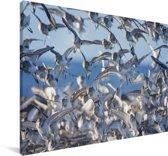 Afbeelding van kleine bonte strandlopers Canvas 140x90 cm - Foto print op Canvas schilderij (Wanddecoratie woonkamer / slaapkamer)