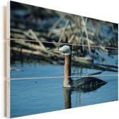Roodhalsfuut zwemt in het blauwe water Vurenhout met planken 90x60 cm - Foto print op Hout (Wanddecoratie)