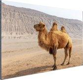 Staande kameel in China Aluminium 90x60 cm - Foto print op Aluminium (metaal wanddecoratie)
