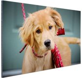 Golden Retriever pup met strik Aluminium 30x20 cm - klein - Foto print op Aluminium (metaal wanddecoratie)