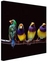 Papegaaien op stok Canvas 30x20 cm - klein - Foto print op Canvas schilderij (Wanddecoratie woonkamer / slaapkamer) / Dieren Canvas Schilderijen