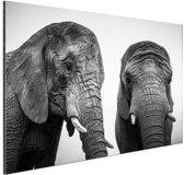 Nieuwsgierige olifanten zwart-wit Aluminium 120x80 cm - Foto print op Aluminium (metaal wanddecoratie)