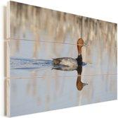 Reflectie van een zwemmende roodkopeend Vurenhout met planken 120x80 cm - Foto print op Hout (Wanddecoratie)
