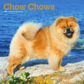 Chow Chows Kalender 2020