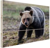 FotoCadeau.nl - Beer  Hout 80x60 cm - Foto print op Hout (Wanddecoratie)