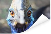Een blauwe Emoe kijkt recht in de camera Poster 120x80 cm - Foto print op Poster (wanddecoratie woonkamer / slaapkamer)