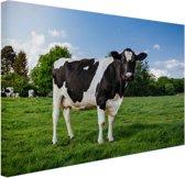Zwart witte Koe Canvas 80x60 cm - Foto print op Canvas schilderij (Wanddecoratie woonkamer / slaapkamer) / Dieren Canvas Schilderijen