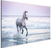 Paard op het strand Aluminium 90x60 cm - Foto print op Aluminium (metaal wanddecoratie)