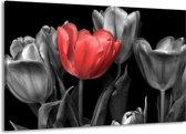 Canvas schilderij Tulp | Rood, Grijs, Zwart | 140x90cm 1Luik