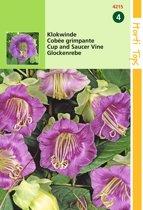 2 stuks Cobaea Scandens Violetblauw