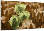 Glasschilderij Tulpen   Bruin, Groen, Zwart   120x70cm 1Luik   Foto print op Glas    F002763