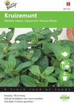Kruizemunt - Mentha spicata - set van 6 stuks