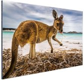 Wallaby op het strand Aluminium 180x120 - XXL cm - Foto print op Aluminium (metaal wanddecoratie)