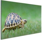 Schildpad op gras Aluminium 120x80 cm - Foto print op Aluminium (metaal wanddecoratie)