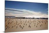 Bonte strandlopers op de kust Aluminium 180x120 cm - Foto print op Aluminium (metaal wanddecoratie) XXL / Groot formaat!