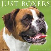 Just Boxers 2020 Wall Calendar (Dog Breed Calendar)
