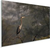 Purperreiger op een tak in het bos Plexiglas 30x20 cm - klein - Foto print op Glas (Plexiglas wanddecoratie)