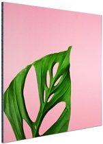 Botanisch blad op roze Aluminium 50x50 cm - Foto print op Aluminium (metaal wanddecoratie)