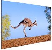 Rode kangoeroe Aluminium 180x120 cm - Foto print op Aluminium (metaal wanddecoratie) XXL / Groot formaat!