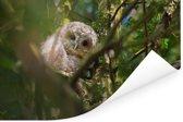 Bosuil tussen de takken in de boom Poster 90x60 cm - Foto print op Poster (wanddecoratie woonkamer / slaapkamer)