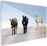 Ezels op de weg Glas 30x20 cm - Foto print op Glas (Plexiglas wanddecoratie)