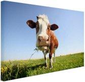 Close-up koe Canvas 120x80 cm - Foto print op Canvas schilderij (Wanddecoratie woonkamer / slaapkamer) / Dieren Canvas Schilderij