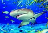 Educa De haai - 500 stukjes