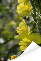 Gele teunisbloemen tijdens een zonnige dag Poster 80x120 cm - Foto print op Poster (wanddecoratie woonkamer / slaapkamer)