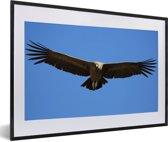 Foto in lijst - Een Andescondor met gespreide vleugels fotolijst zwart met witte passe-partout 60x40 cm - Poster in lijst (Wanddecoratie woonkamer / slaapkamer)