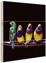Papegaaien op stok Hout 120x80 cm - Foto print op Hout (Wanddecoratie)