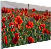 Klaprozen in het veld Glas 90x60 cm - Foto print op Glas (Plexiglas wanddecoratie)