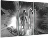 Glas schilderij Bloem | Zwart, Grijs | 120x80cm 3Luik | Foto print op Glas |  F006327