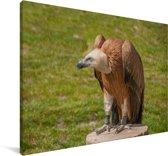 Vale gier op een boomstronk Canvas 60x40 cm - Foto print op Canvas schilderij (Wanddecoratie woonkamer / slaapkamer)