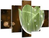 Glasschilderij Tulp | Groen, Bruin | 100x70cm 5Luik | Foto print op Glas |  F004994