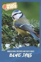 Unbelievable Pictures and Facts About Blue Jays