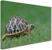 Schildpad op gras Canvas 60x40 cm - Foto print op Canvas schilderij (Wanddecoratie)