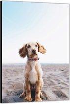 Dibond –Puppy op het Strand– 60x90cm Foto op Dibond;Aluminium (Wanddecoratie van metaal)