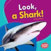 Look, a Shark!