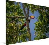 Reuzentoekan in een boom in Brazilië Canvas 30x20 cm - klein - Foto print op Canvas schilderij (Wanddecoratie woonkamer / slaapkamer)