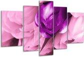 Glasschilderij Tulp | Paars, Wit, Zwart | 170x100cm 5Luik | Foto print op Glas |  F003896